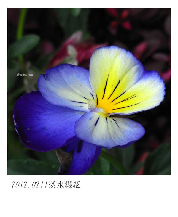 2012-02-11-淡水櫻花健行-079.jpg