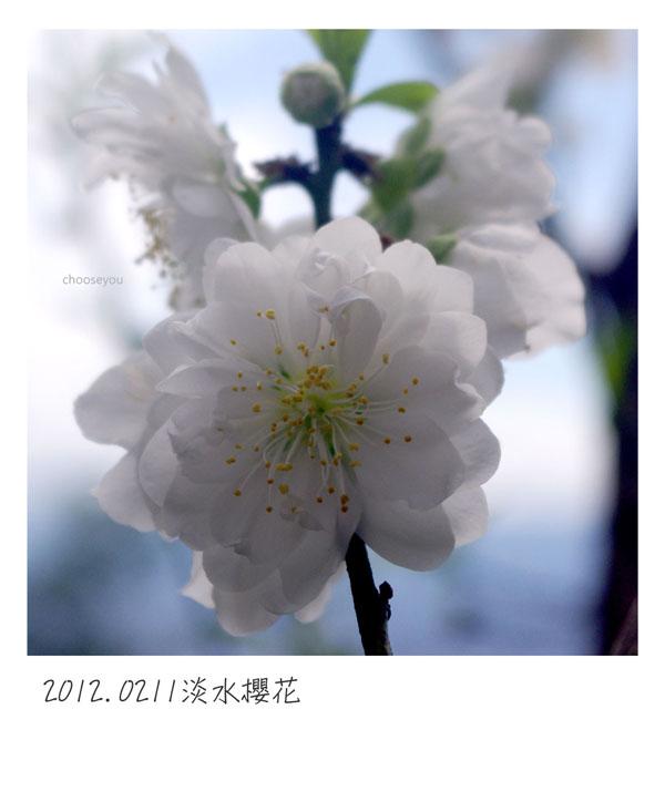 2012-02-12-北投櫻花-020.jpg
