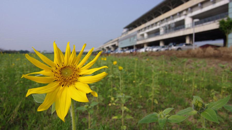 2012-0228-台南遊-406
