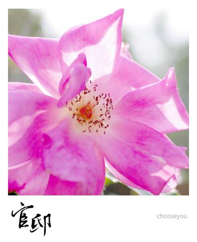 2013-0317-官邸花卉-007