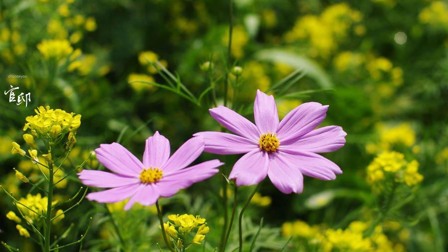 2013-0317-官邸花卉-002