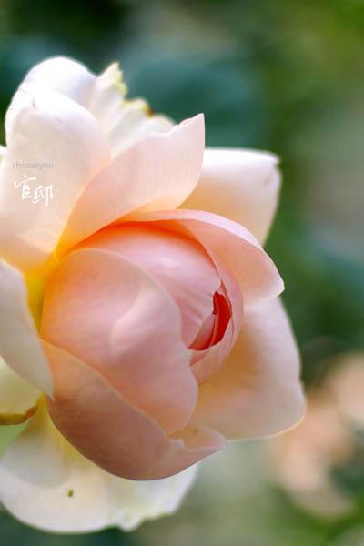 2013-0317-官邸花卉-019