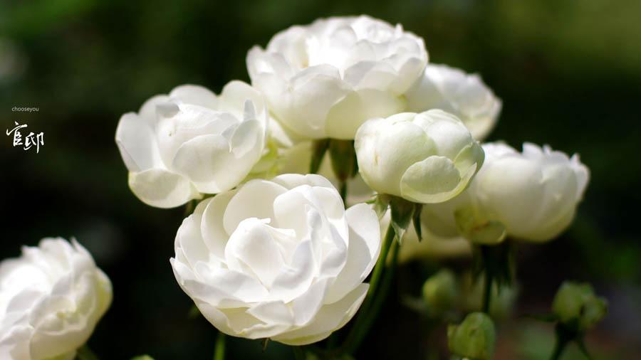 2013-0317-官邸花卉-008