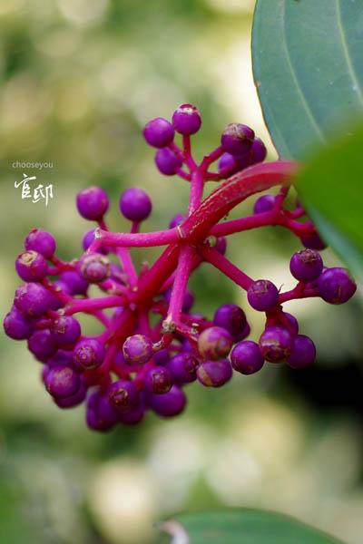 2013-0317-官邸花卉-024