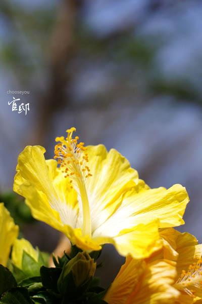 2013-0317-官邸花卉-006