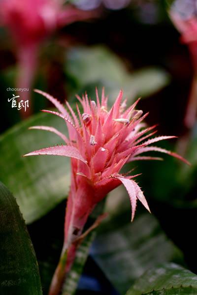 2013-0317-官邸花卉-037