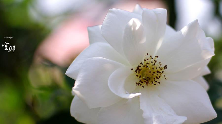 2013-0317-官邸花卉-014
