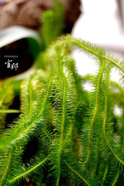2013-0317-官邸花卉-040
