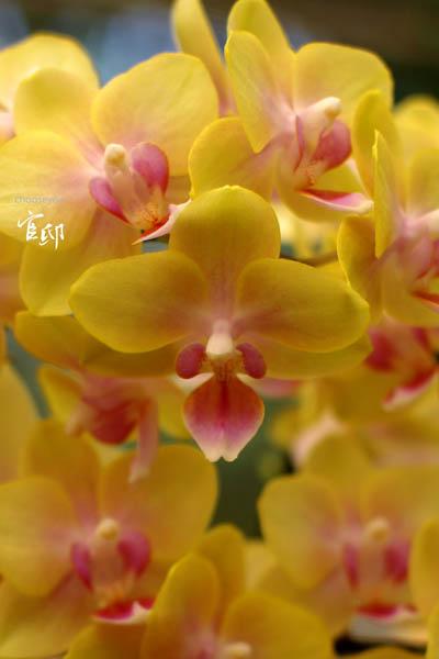 2013-0317-官邸花卉-032