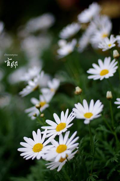 2013-0317-官邸花卉-047