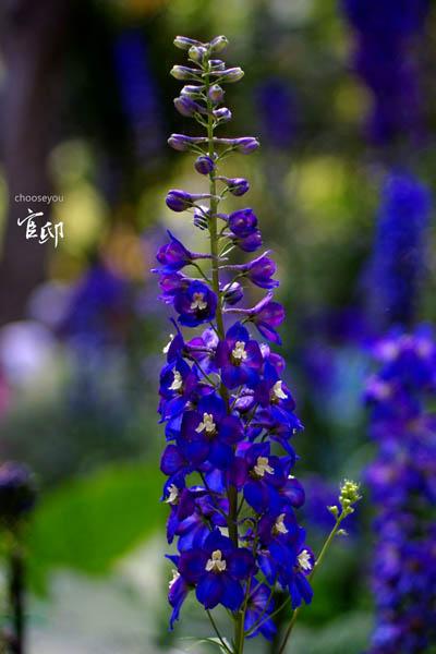2013-0317-官邸花卉-045
