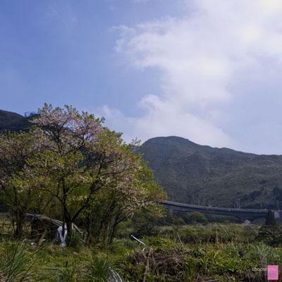 2011-03-20-竹子湖海芋季-B007.jpg