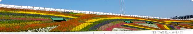 2011-04-20-花博-A01.jpg