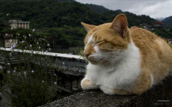 2010雙十國慶-平溪線-侯硐-030.jpg