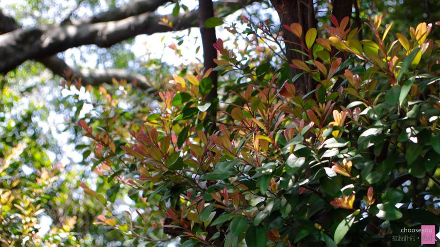 2011-04-20-花博-096.jpg