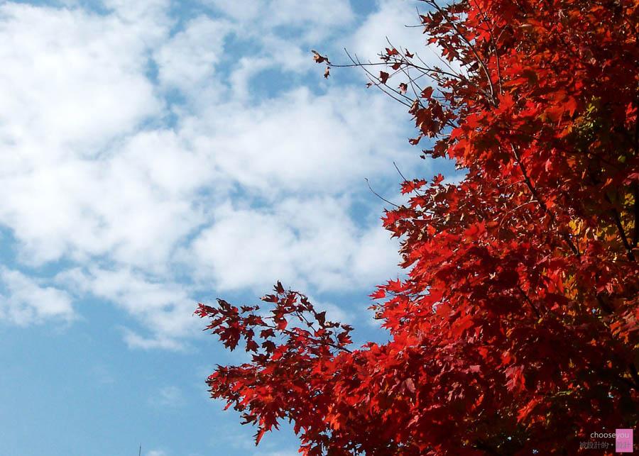2011-02-20-(2003)日本-北海道-043.jpg