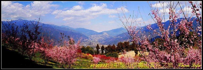 01梨山福壽山賞花之旅.jpg