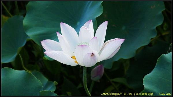 10福州 南公園.jpg