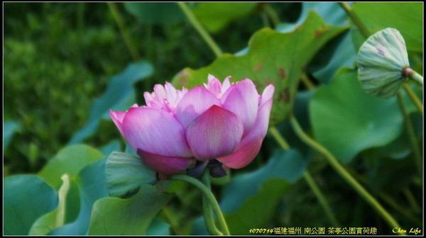 12福州 南公園.jpg