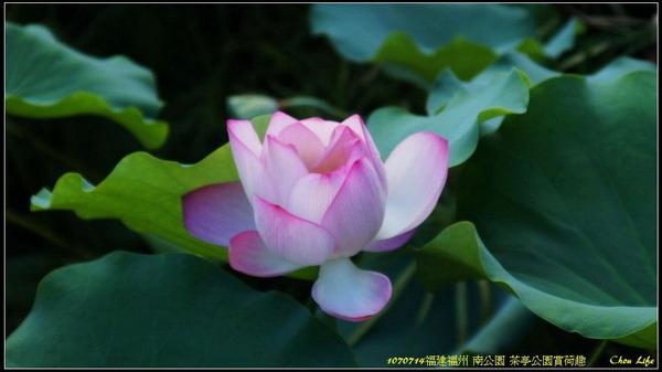 11福州 南公園.jpg
