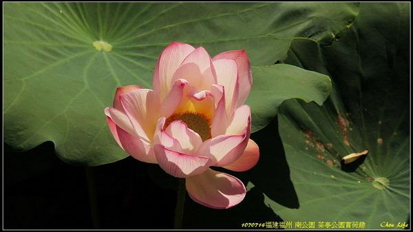 14福州 南公園.jpg