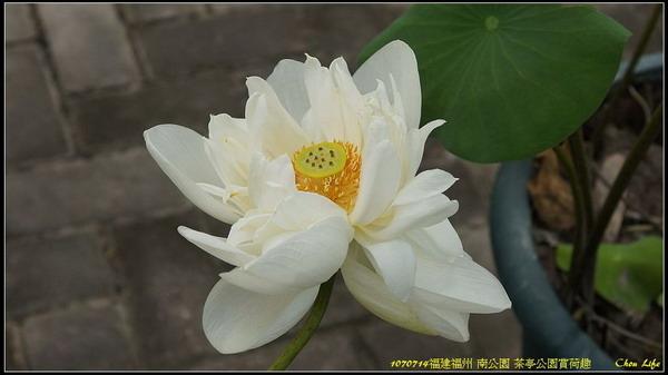 27福州 茶亭公園.jpg