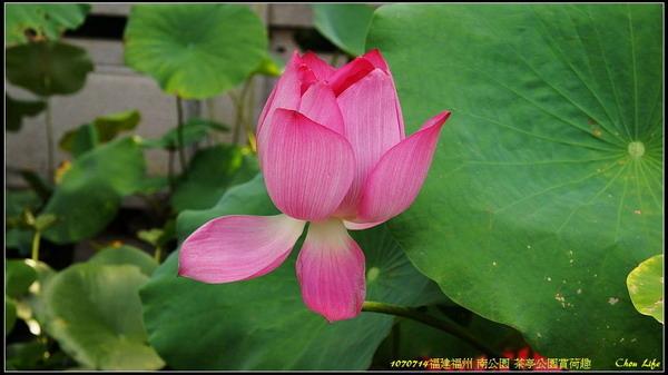 26福州 茶亭公園.jpg