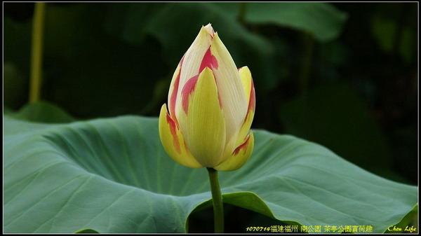 29福州 茶亭公園.jpg