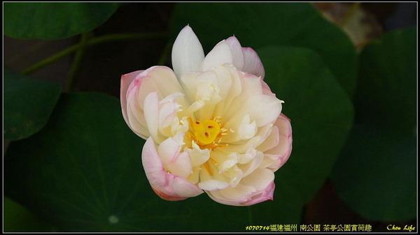 28福州 茶亭公園.jpg