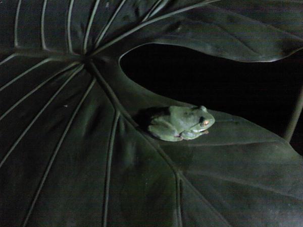 2011-03-05_19-59-35_318.jpg