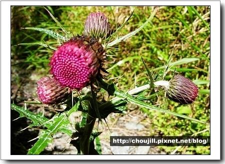 不知名的植物,很可愛!