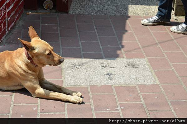18牠不知是當地人的狗還是被棄養