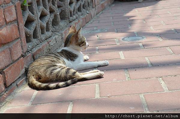 20摸乳巷的貓也很愛曬陽光