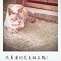 cat06-01