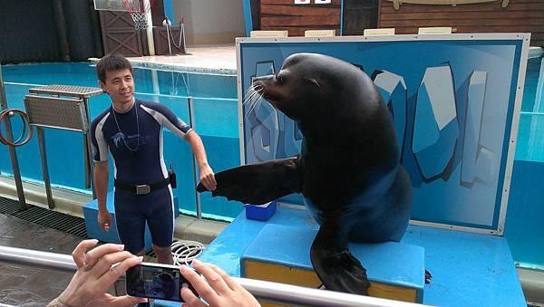 趙藤雄的海豚秀趙藤雄海洋公園趙藤雄遠雄海洋公園