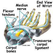carpal_tunnel_tendons175.jpg