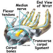 carpal_tunnel_tendons175.jpg