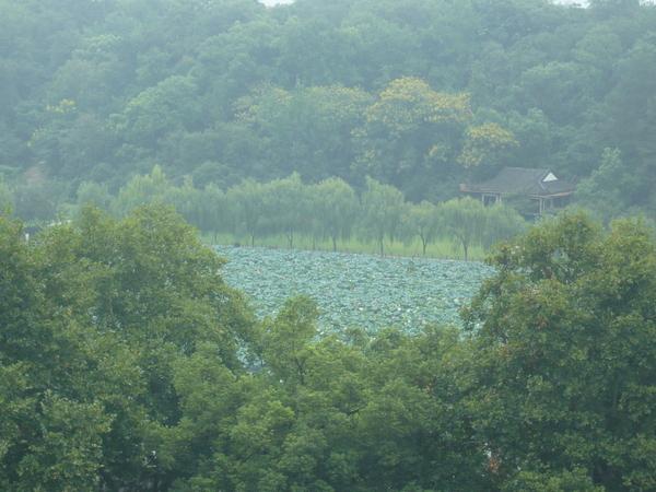 2008 杭州西湖 050.jpg