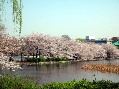400px-上野公園不忍池畔.JPG