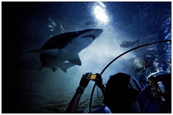 【水族館日】鯊魚!