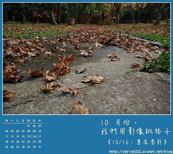 20091016葉落季節.JPG