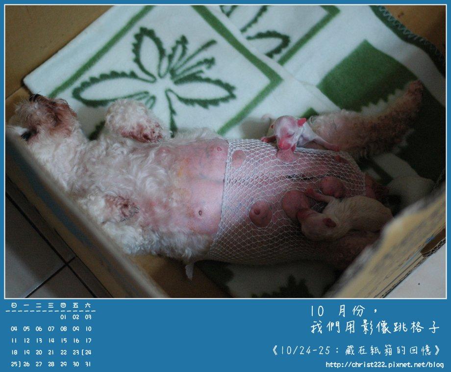 20091024-25藏在紙箱的回憶.JPG