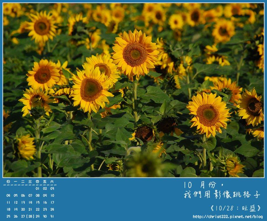 20091028旺盛.JPG