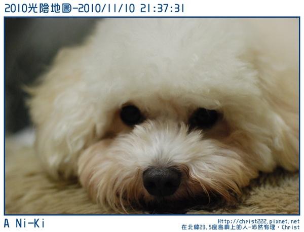 20101110-213731-001.JPG