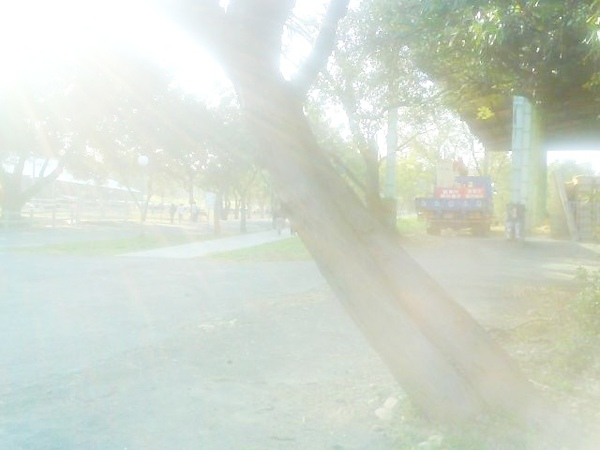 Photo_0352.jpg