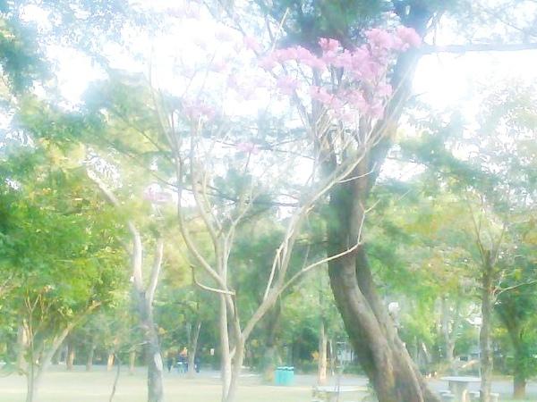 Photo_0377.jpg