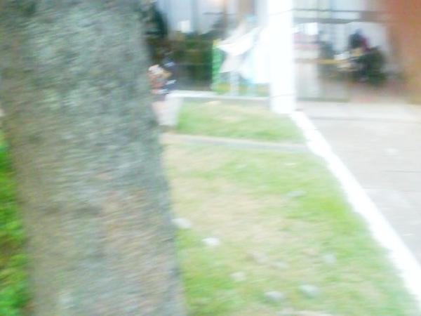 Photo_0397.jpg