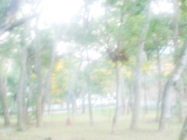 Photo_0427.jpg