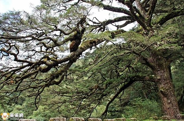 玉山國家公園