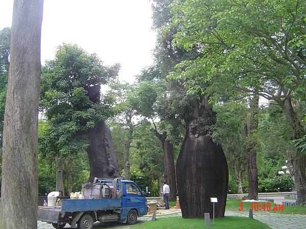 傳說中...很貴的樹唷